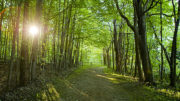 What's the Path to Your Brighter Future?