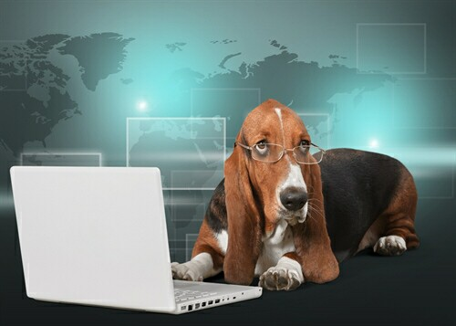 Can an old data dog teach data scientists new tricks?